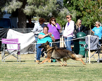 American Bred Dog # 27 Winners Dog Triphills Isosceles Diesel of Independence-photos